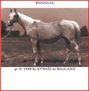 peleng russia stallion